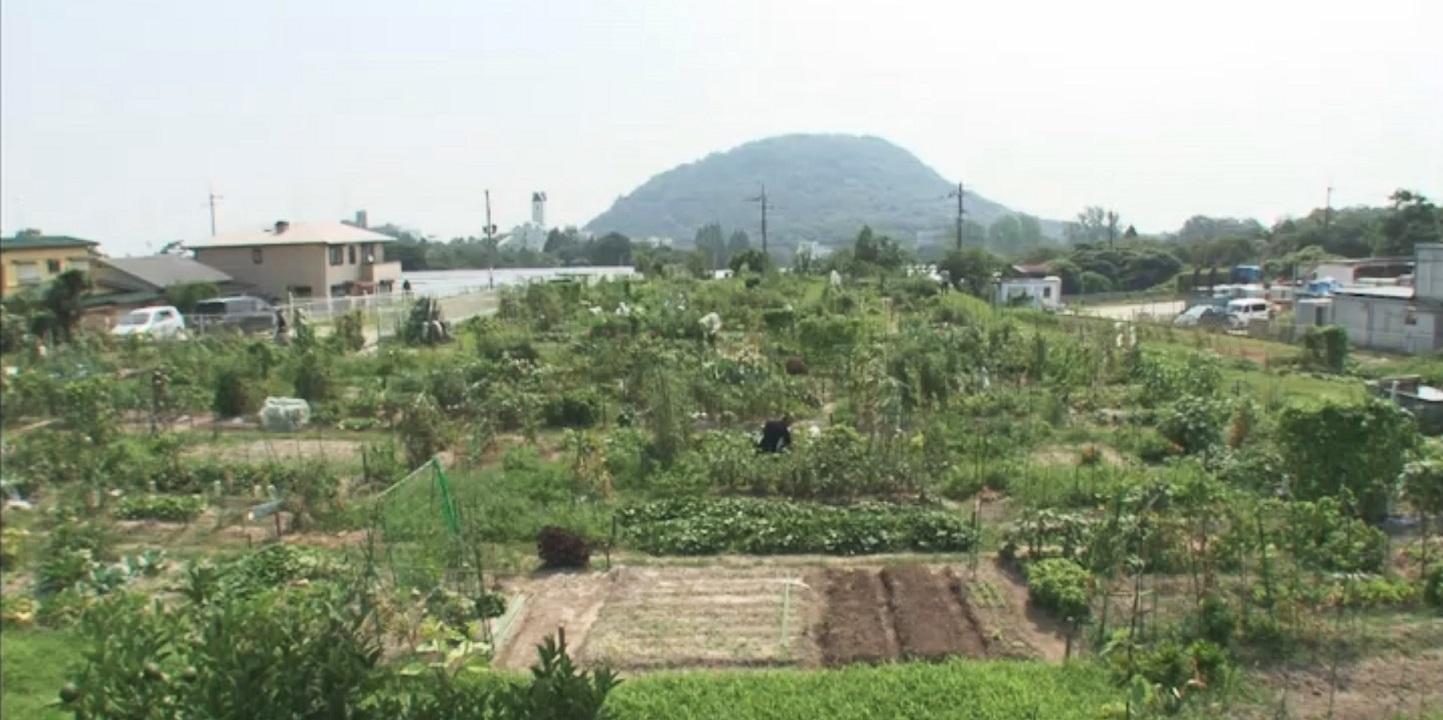 rent a farm 1